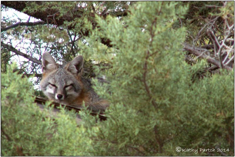 Fox6_ksp'14e