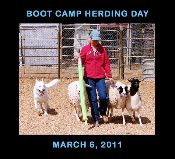 Herding 2011 001