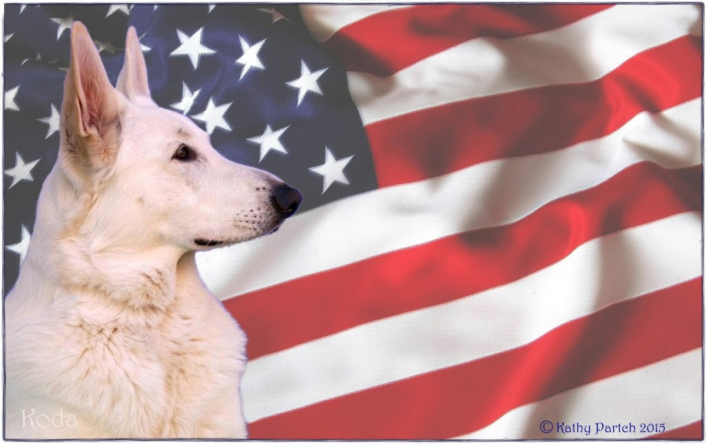 Red, White and Blue Proud to be American Bred