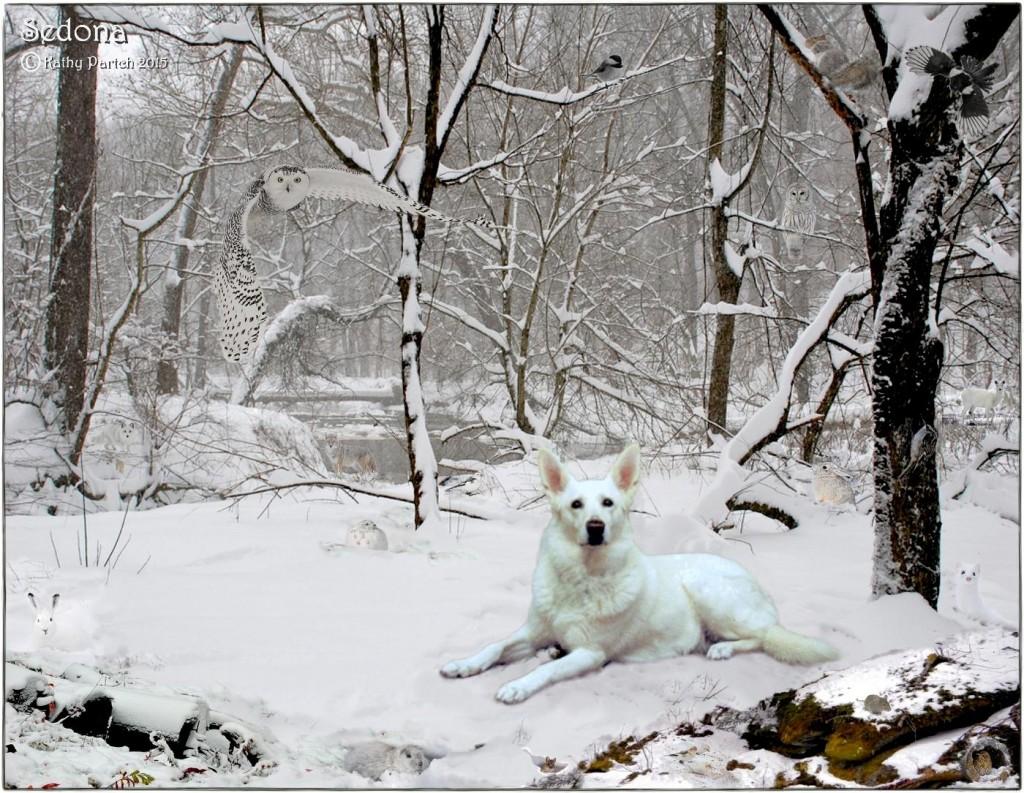 Sedona Winter Woodland Friends_ksp'15Web