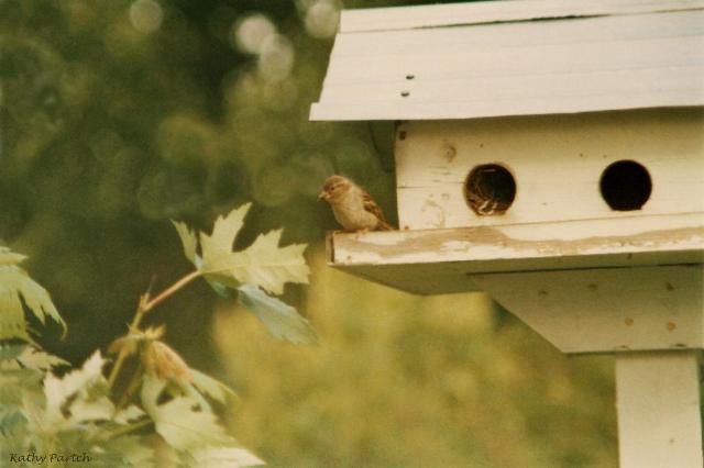 birdhouse_kp_web