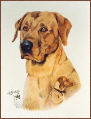 duke_colored_pencil_web