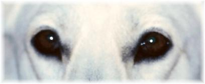 sedona_eyesweb